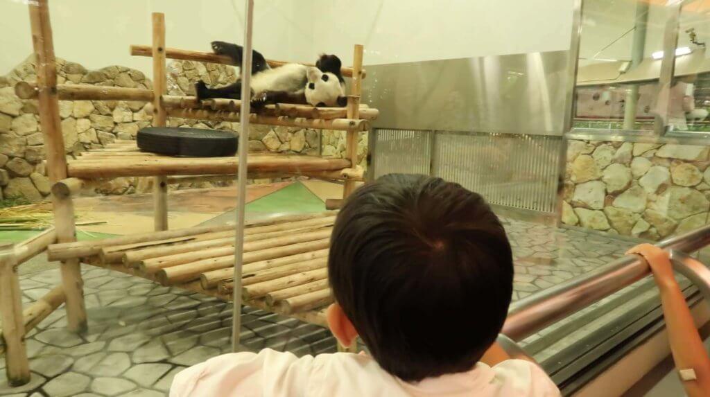 パンダを観覧する長男とらクン