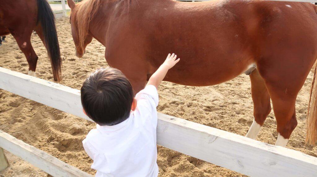 お馬さんをさわるとらクン